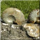 kleine Fossilien