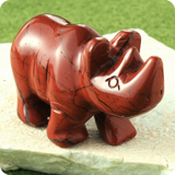 Nashörner