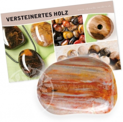 Petrified Wood Gemstone Set