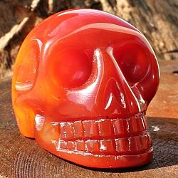 Karneol Schädel Skull aus Stein, 35mm Schöne Edelstein-Qualität