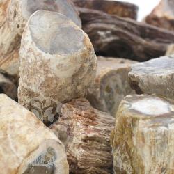 Versteinertes Holz 5 Stk