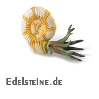 Ammonite Model klein 4,8