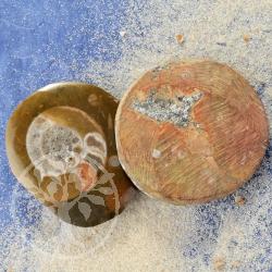 Ammoniten 10 Stueck