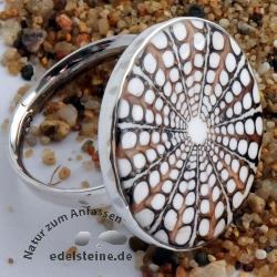 Spider-Muschel Ring mit Silber 4