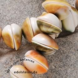 Shiva Muschel Perlen 14mm 40cm