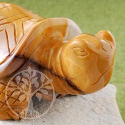 Mookait Schildkröte