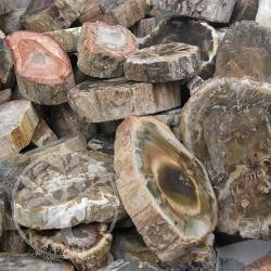Petrified Wood Round 100gr