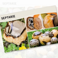Septarie Mineral Stone Description Cards