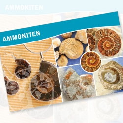 Ammonite Fossil Description Cards