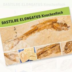 Fossile Fische Dastilbe Elongatus Fossilien Karte