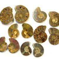 Ammoniten 10 Paare Madagaskar ca. 45-60mm