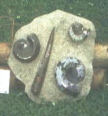 Fossilien-Platte M
