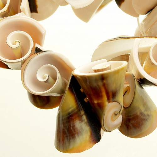 Bracelet trumpet shells delicate wrist