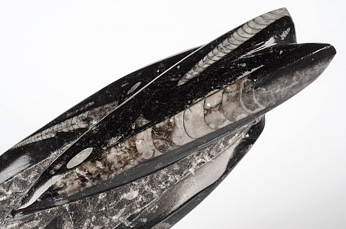 Orthoceras Fossil Tower sp23