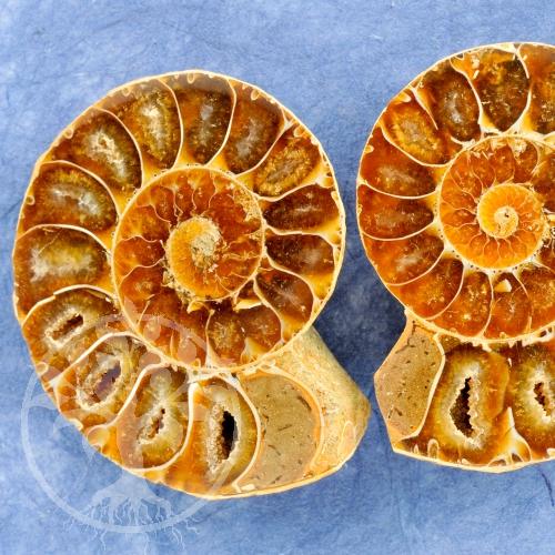 Ammoniten Paare Madagaskar klein
