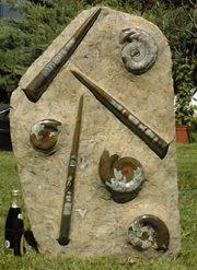 Fossilien Platte XXXL