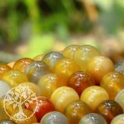 Achat Perlen Botswanachat Gelb-Orange Kugel 8 mm Bänderun Achatperlen 40cm