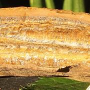 Tigerauge Rohstein Mineral ungeschliffen 12x10x4cm 890gramm