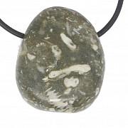 Shell Jasper Crinoidae Jasper Fossil Tumbled Stone Pendant A/B