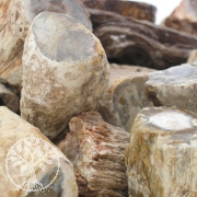 petrified wood  5pcs