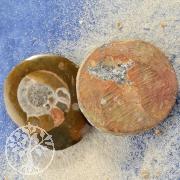 Ammoniten 5 Stueck