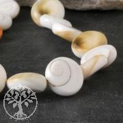 Shiva shell Beads Disc