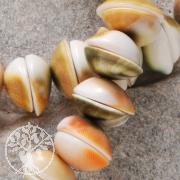 Shiva Shell Beads small Button 14mm 40cm