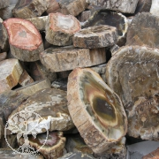 Petrified Wood Round 100gr
